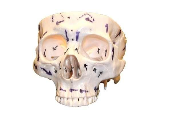 Cranio colonna vertebrale